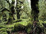 foret forests  8 jpg