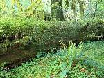foret forests  9 jpg