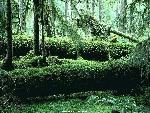 foret forests 1 jpg
