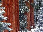 foret forests 12 jpg