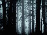 foret forests 13 jpg