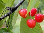 fruits fruits   jpg