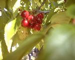 fruits fruits 13 jpg