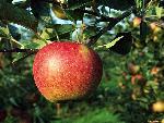 fruits fruits 14 jpg