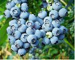 fruits fruits 16 jpg
