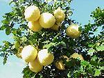 fruits fruits 23 jpg