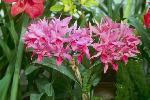 orchidees du monde P 3 1148 JPG