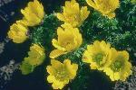 perennials en fleur P 3 1 33 JPG