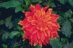 perennials en fleur P 3 1 43 JPG