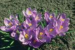 perennials en fleur P 3 1 44 JPG