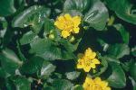 perennials en fleur P 3 1 53 JPG