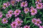 perennials en fleur P 3 1 59 JPG
