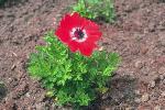 perennials en fleur P 3 1 64 JPG