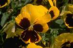 plantes et fleurs P 1 7657 JPG