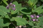 plantes et fleurs P 1 7681 JPG
