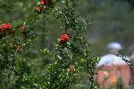 plantes et fleurs P 1 7687 JPG