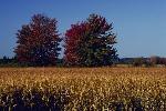 automne P 3 1763 JPG