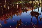 automne P 3 1768 JPG