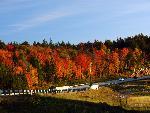 automne autumn scene 1 jpg