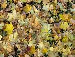 automne autumn scene 11 jpg