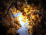 automne autumn scene 2 jpg