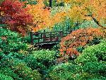 automne autumn scene 7 jpg