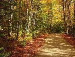 automne autumn scene 9 jpg