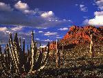 desert desert 1 jpg