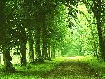 foret forest 1 jpg