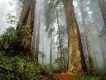 foret forest 2 jpg