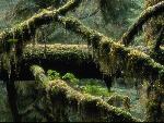 foret forest 5 jpg