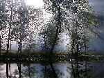 foret forest 13 jpg