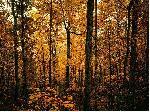 foret forest 14 jpg