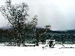 foret forest 19 jpg