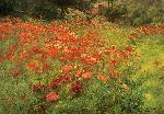 John Ottis Adams Adams John Ottis In Poppyland jpg