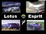 lotus lotus2 8 x6  jpg